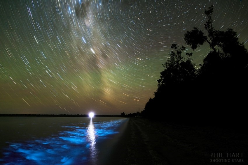 BioluminescenceMW_PhilHart (Copiar)